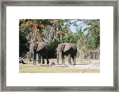 Focus Framed Print by David Wahome