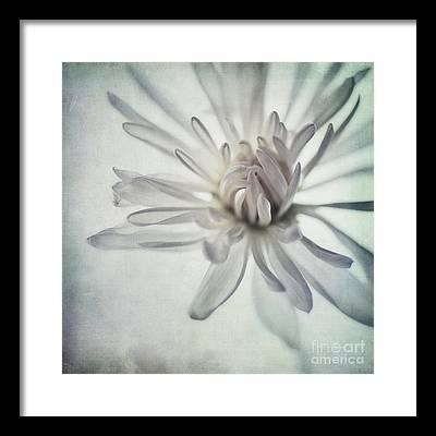 Floral Close-up Framed Prints