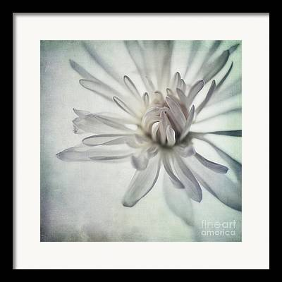 Close Up Floral Framed Prints