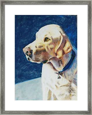 Focused Framed Print by Billie Colson