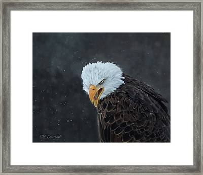 Focused Framed Print by CR Courson