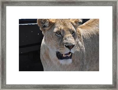 Focused Framed Print by Joe  Burns