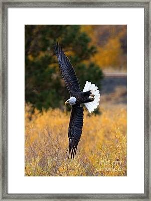 Focused Framed Print by Mike Dawson