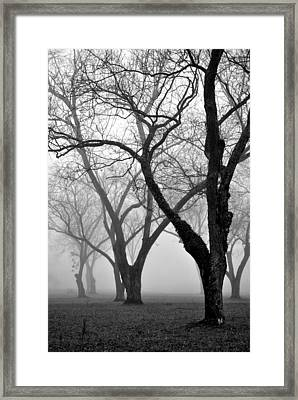 Fog 1 Framed Print by Beverly Hammond