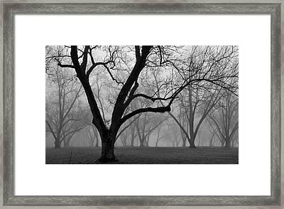 Fog 2 Framed Print by Beverly Hammond