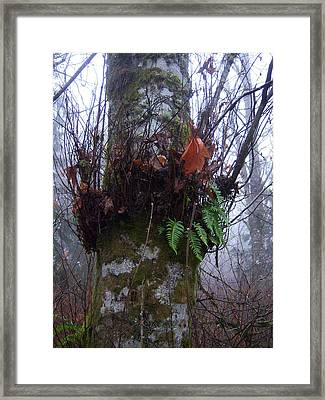 Fog And Ferns Framed Print by Ken Day