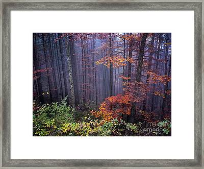 Fog And Forest Colours Framed Print