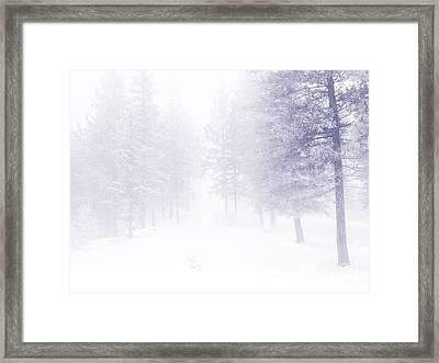 Fog And Snow Framed Print by Tara Turner