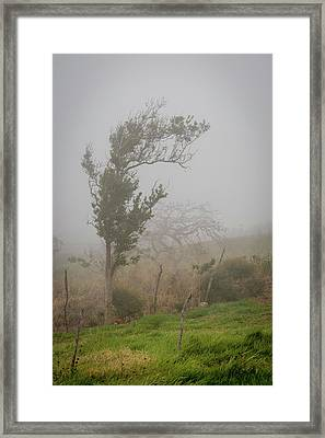 Fog And Wind Framed Print