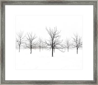 Fog And Winter Black Walnut Trees  Framed Print