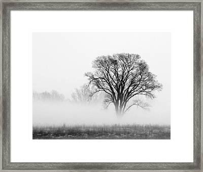 Fog Framed Print by Elizabeth Reynders