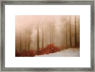 Fog IIi Framed Print by Elena E Giorgi