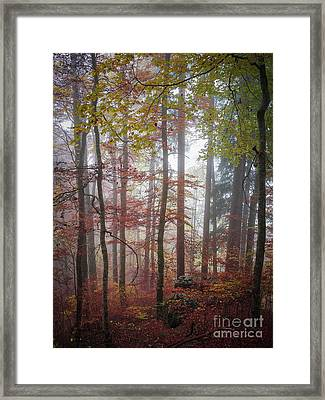 Fog In Autumn Forest Framed Print