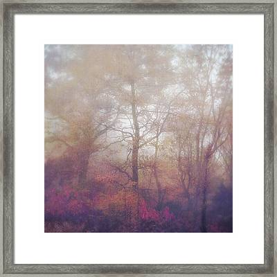 Fog In Autumn Mountain Woods Framed Print