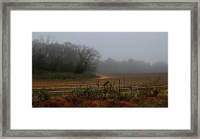 Fog In The Field Framed Print
