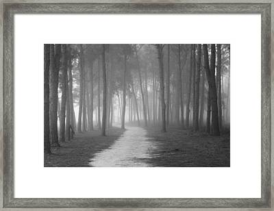 Fog In The Forest Framed Print by Gary Bydlo