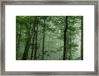 Fog In The Forest Framed Print