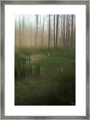 Fog In The Marsh Framed Print