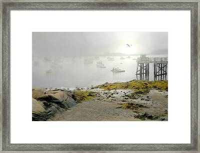 Fog In The Morn Framed Print by Diana Angstadt