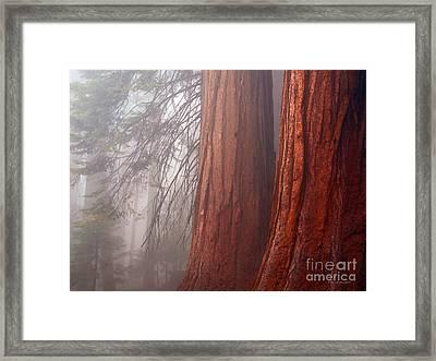 Fog In The Redwood Forest Sequoia National Park Framed Print