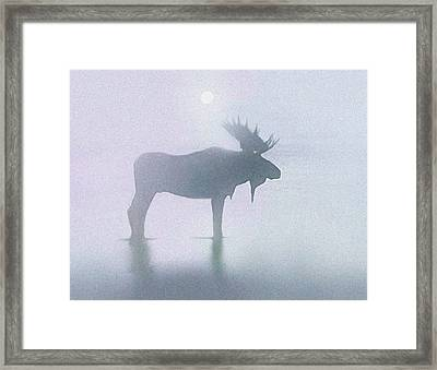 Fog Moose Framed Print by Robert Foster