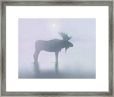 Fog Moose Framed Print by Robert Foster