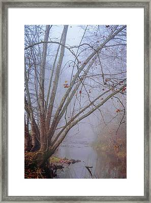 Fog On Buffalo Creek 1 Framed Print