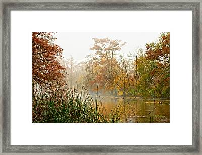Fog On The Bayou Framed Print by Bill Perry