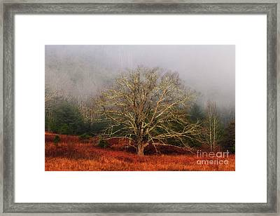 Fog Tree Framed Print
