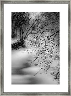 Framed Print featuring the photograph Foggy Feeder by Kendall McKernon
