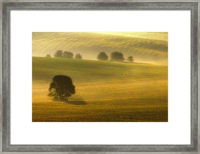 Foggy Fields Framed Print