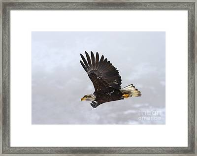 Foggy Flight Framed Print by Mike  Dawson