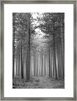 Foggy Forest Framed Print by Svetlana Sewell