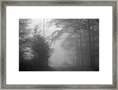 Foggy Forest Framed Print by Yago Veith