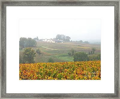 Foggy French Vineyard Framed Print