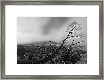 Foggy Grapevine Framed Print by Richard Leon