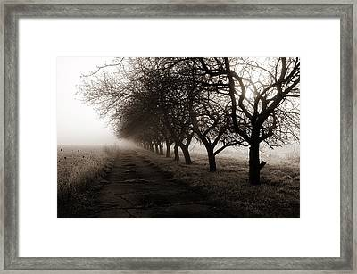 Foggy Lane Framed Print