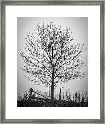 Foggy Lone Tree Hill Fine Art Framed Print