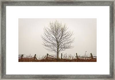 Foggy Lone Tree Hill Framed Print