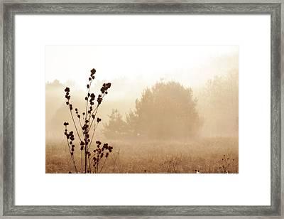 Foggy Meadow 2 Framed Print