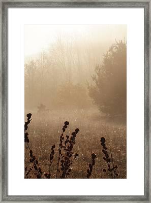 Foggy Meadow Framed Print