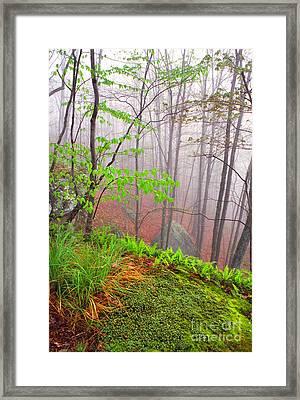 Foggy Misty Spring Morning Framed Print by Thomas R Fletcher