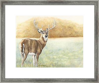 Foggy Morning Buck Framed Print by Charlotte Yealey