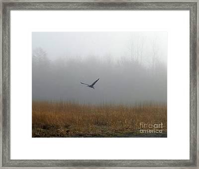 Foggy Morning Heron In Flight Framed Print by Helen Campbell