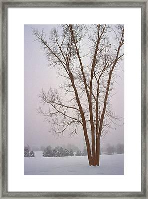 Foggy Morning Landscape 13 Framed Print by Steve Ohlsen