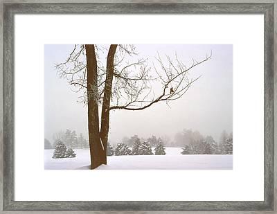 Foggy Morning Landscape 16 Framed Print by Steve Ohlsen