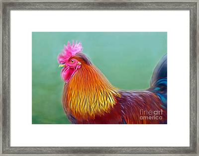 Foggy Morning Rooster Framed Print
