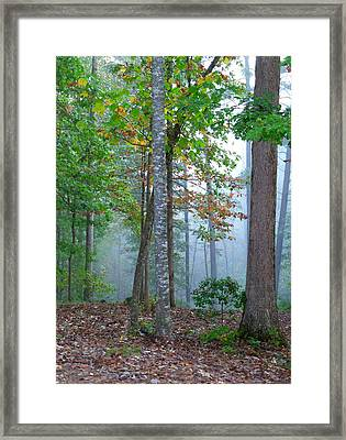Foggy Morning Framed Print by Rosie Brown