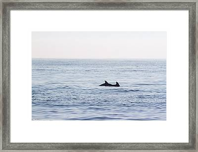 Foggy Morning Swim Framed Print