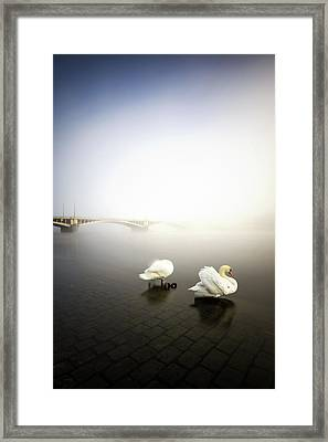 Foggy Morning View Near Bridge With Two Swans At Vltava River, Prague, Czech Republic Framed Print